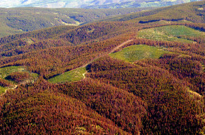 Is global warming responsible for the pine beetle spread or is it something else?