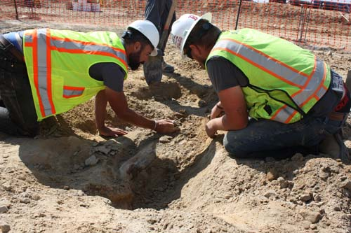 Experts from the Denver Museum of Nature & Science work to uncover a dinosaur fossil found in Thornton. (City of Thornton)